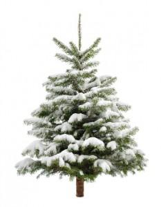 Tannenbaum_Weihnachtsbaum_Basel